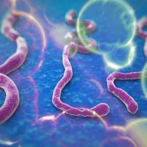 Virus más mortíferos que elébola