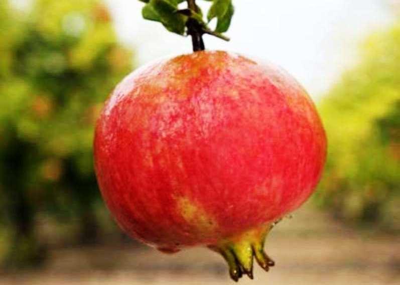 Granada:  Virtudes y beneficios de esta protectora fruta del corazón