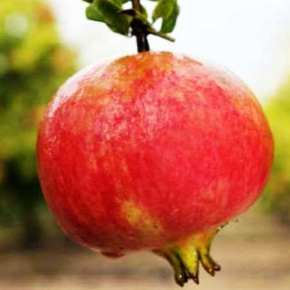 Granada:  Virtudes y beneficios de esta protectora fruta delcorazón