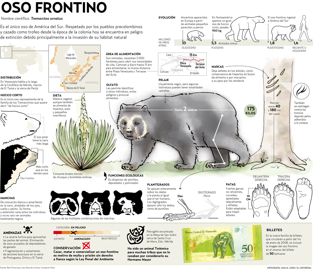 OSO FRONTINO