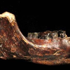 Fósil hallado por un pescador puede revelar un nuevo tipo de humanoantiguo