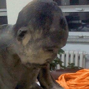 Monje Budista momificado hace 200 años no estámuerto