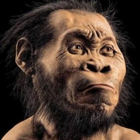 Descubren una especie humana desconocida hasta la fecha: Homonaledi