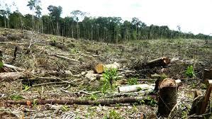 Naturaleza, Salud y Bienestar deforestacion 02