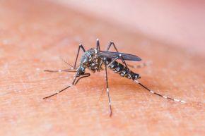 Caso de zika por transmisión sexual enTexas