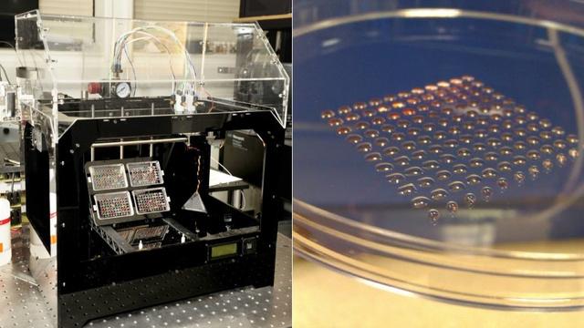 IMPLANTES 3D células MADRES
