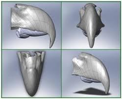 IMPLANTES 3D extremidades
