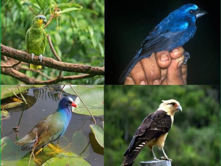 Aves Loro pajaros
