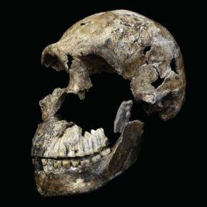 Homo Naledi Neo: Contemporáneo del Homo Sapiens ¡A Reescribir laHistoria!