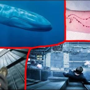 La ballena azúl llega a Venezuela y cobra la vida de unaadolescente