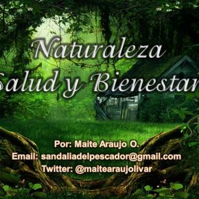 Maite Araujo Olivares: Los beneficios deljengibre