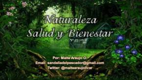 Maite Araujo Olivares:  Los Océanos, el Medio Ambiente y la creciente basuraplástica