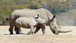 Las especies de animales más raras y amenazadas por elhombre
