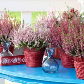 Plantas con flores atractivas para cultivar en casa
