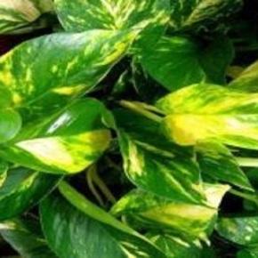 Seis Plantas purificadoras del aire que te oxigenan y eliminan contaminantes en casa uoficina